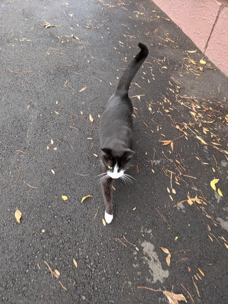 One-eyed neighbourhood cat walking towards me for pats